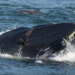 tragado por una ballena