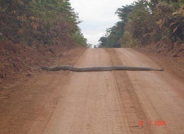anaconda carretera brasil