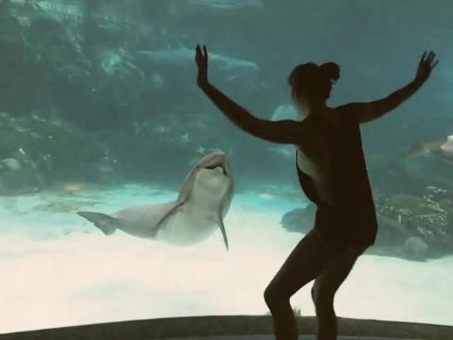 chica hacer reir delfin