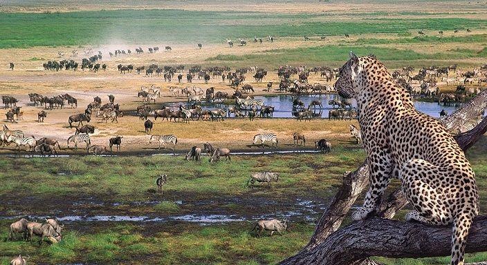 guepardo-ngorongoro-y-serengeti-tanzania