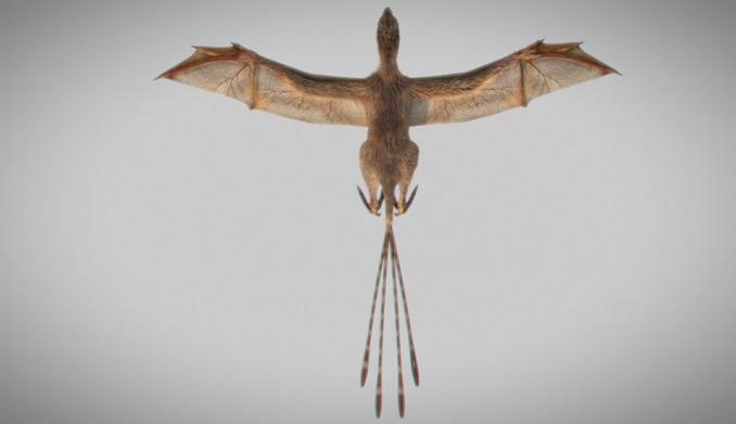 Ambopteryx nuevo dinosaurio volador
