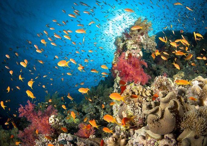 banco-peces-arrecife-coral-