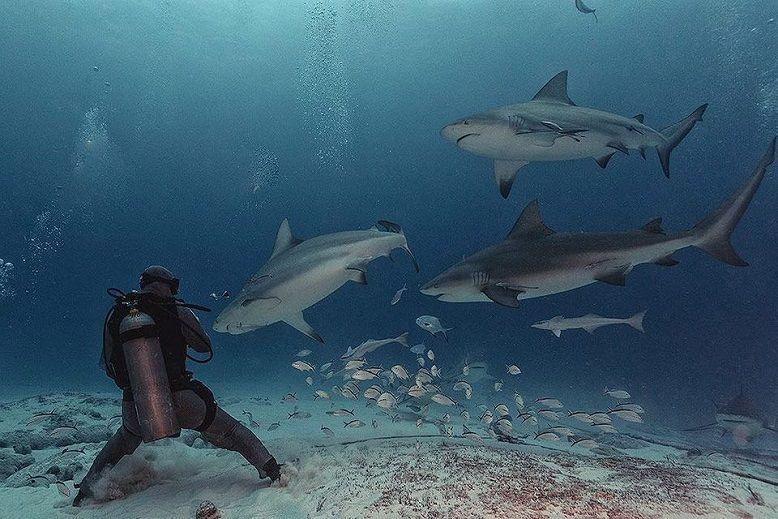 buzo-con-tiburones