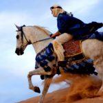 caballo arabe galope
