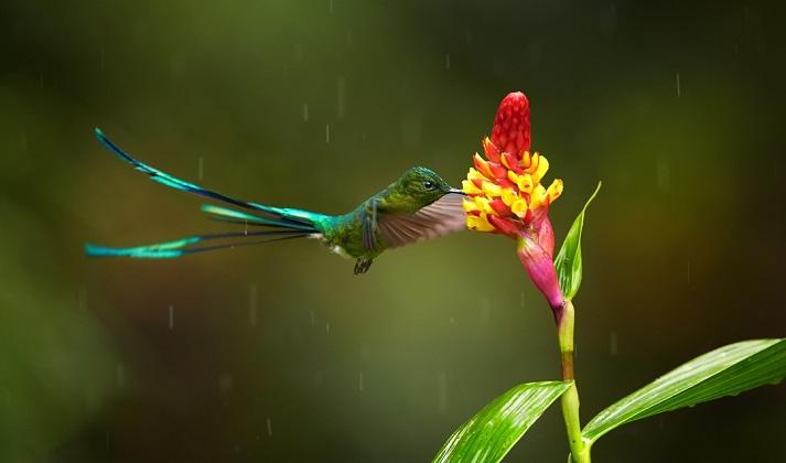 colibri bajo la tormenta