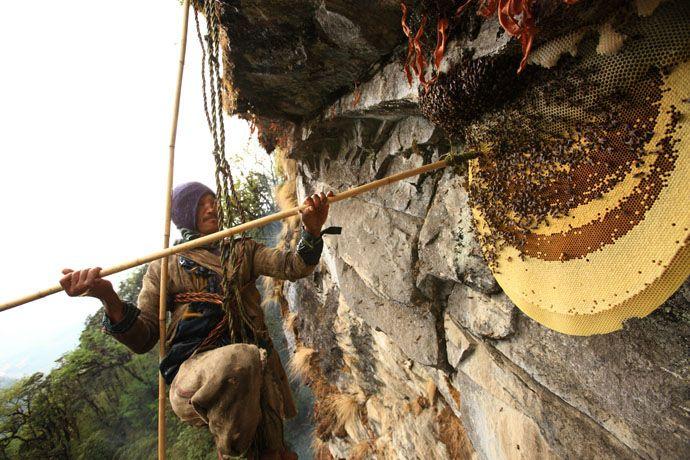 colmena colgante nepal