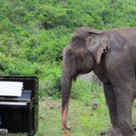 elefante-ciego-pianista-bach