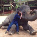 Elefante acude en ayuda de su cuidador en peligro