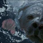Asombrosos descubrimientos en las grabaciones de animales por satélite