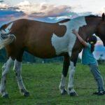 niña-caballo-