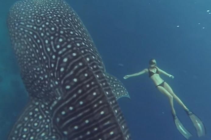 ocean ramsey tiburon ballena
