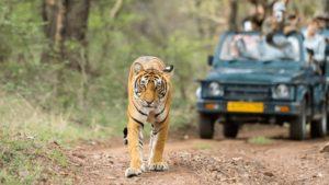 tigre jeep