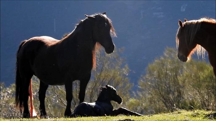 yegua con potro
