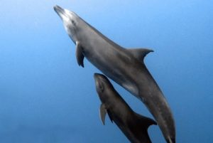 delfin adopta ballena