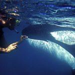 mujer orca