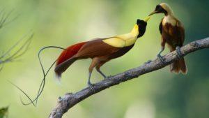 aves del paraiso