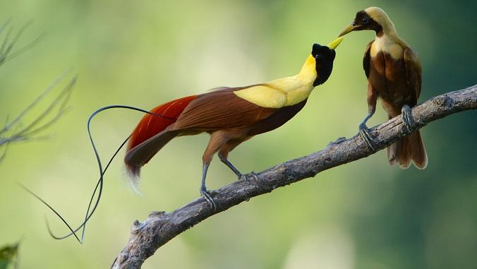 Las aves del paraíso (Netflix) | | Animales en Video