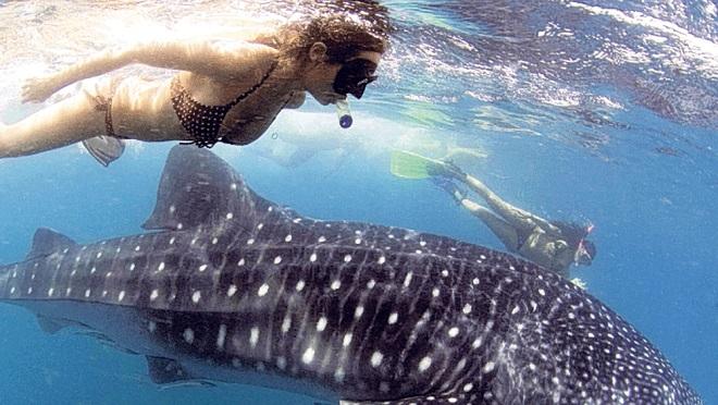 tiburon ballena mujer
